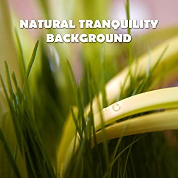 Natural Tranquility Background: Long Relaxation, Piano & Guitar Music, Serenity in Wellness Center, Nature Sounds, Therapeutic Touch