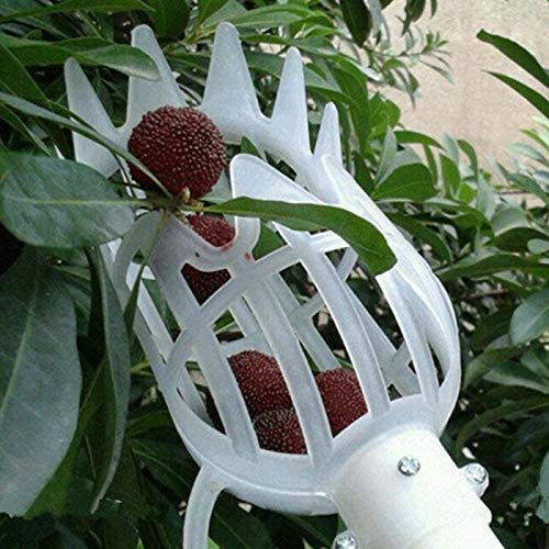 Abracing Fruit picker Orchard picking tool Metal fruit picker, high collection tools peach and apple trees for gardening, 25x14cm (Envío desde : Estados Unidos, Tamaño : White)