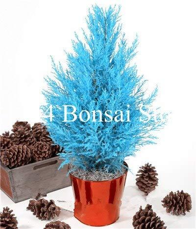 SANHOC 20 Stück blauen Zypressen Bonsai Conifer Cypress Planta, Evergreen Landschaft Pflanze, Bonsai Topfpflanze für Hausgarten: 2