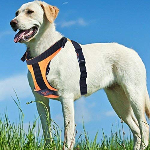 Seacue Dog Harness No Pull Adjustable Pet Oxford Soft Vest for Small Medium Large Dogs Easy Control Harness (Large, Blue)