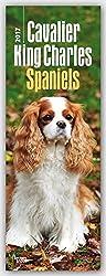 Cavalier King Charles Spaniels 2017 Slimline Calendar[Amazon]