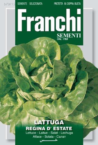 Franchi Samen Salat Regina D'Estate