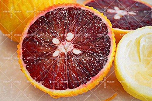 20 PCS/SAC citronnier rouge est également graines de fruits bio orange sanguine bonsaï graines de chaux rouge pot de plante de jardin à la maison de nourriture saine 2