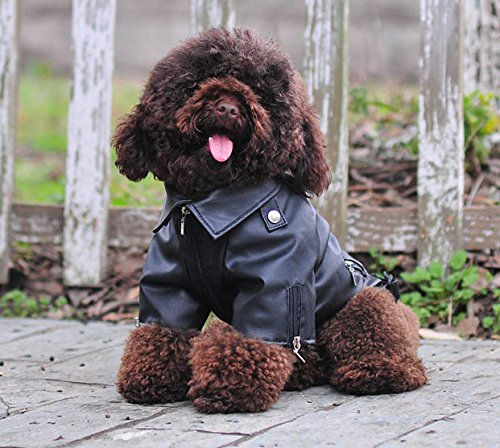 Lovelonglong Cool Dog Leather Jacket, Warm Coats Dogs Windproof Cold Weather Coats for Large Medium Small Dogs, Miniature Poodle Clothing Black L