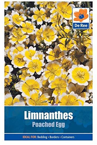 AGROBITS De Ree Limnanthes Egg ACHED Beautyful Jardin flowes 35 Paquet gh Qualité
