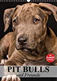 Pit Bulls und Freunde (Wandkalender 2021 DIN A3 hoch)