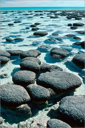 Posterlounge Acrylglasbild 40 x 60 cm: Stromatolithen am Ufer von Georgette Douwma/Science Photo Library - Wandbild, Acryl Glasbild, Druck auf Acryl Glas Bild