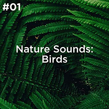 #01 Nature Sounds: Birds
