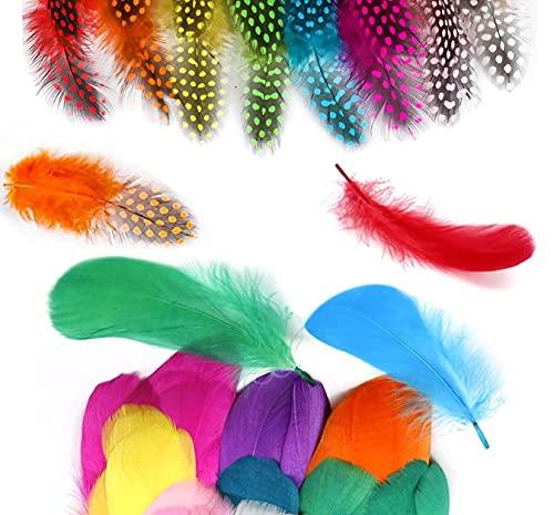 QIMMU 200 Pezzi Piume Colorate,Piume Decorative,Piume Naturali,Piume per Artigianato per Artigianato Fai da Te,Cappelli,Costumi, Decorazione di Feste o Casa