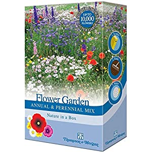 Mixed Perennial Garden Flower Seed Grow Your own Colourful Plants Such as Wallflowers, Poppies & Dianthus 1 x 15g Pack by Thompson & Morgan
