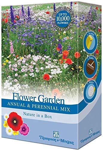 Misto Perenni Giardino Fiore Seme Fai Crescere il Tuo Colorato Piante come come Wallflowers, Papaveri & Dianto 1 x 15g Confezione da Thompson & Morgan