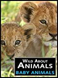 Wild About Animals: Baby Animals