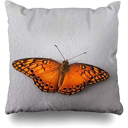Fodera per cuscino quadrato 50x50cm (20In) Maestosa farfalla arancione arancione atterraggio su parete Trasformazione Animali Fauna selvatica Bellezza Moda Cuscino con cerniera Federa decorativa Decorazioni per la casa