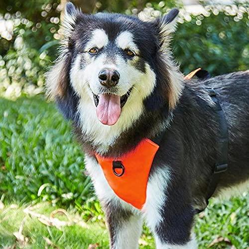 Pettorina per cani senza trazione, pettorina per animali da passeggio con 2 anelli in metallo e maniglia regolabile traspirante Oxford Soft Vest Easy Control Front