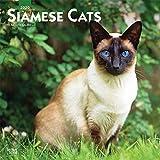 Siamese Cats - Siam-Katzen 2020 - 16-Monatskalender: Original BrownTrout-Kalender [Mehrsprachig] [Kalender] (Wall-Kalender)