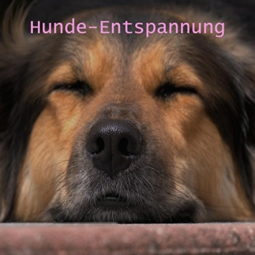 Hunde-Entspannung
