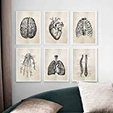 6 Pieces Human Anatomy Science Retro Poster Skeleton Heart Patent Vintage Print Painting Pictures Medical Doctor Clinic Wall Decor 30X40cm No Frame