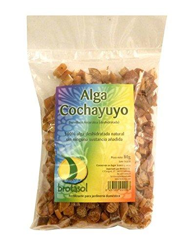 ALGAS COCHAYUYO