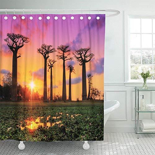 HGTZ Beaux arbres de Baobab au Coucher du Soleil l'avenue de Rideau de Douche Tissu Polyester imperméable 60 x 72 pouces Avec crochets