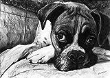 Boxer Dog Art, Boxer Dog Gift, Boxer Dog Artwork, Charcoal Dog Wall Art Print, Black and White Boxer Dog Drawing Decor Hand Signed by Oscar Jetson