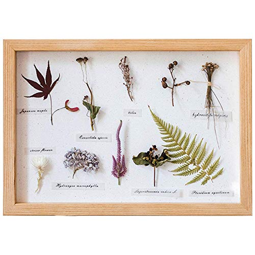 KTDT Solid Wood Deep Box Frame,3D Photo Frame - Glass Window- Interior,Table Top Display Or Wall Hanging,For Specimen,Flowers,Art Crafts,Wedding Gifts,etc.