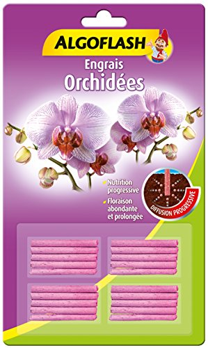 orchidee lidl
