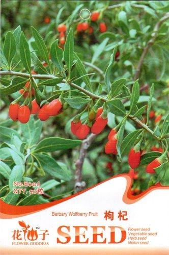 Paquet de semences d'origine de la fruits Noir Prince semences de Pasteque sans pépins Japon présenté le 6 de grain