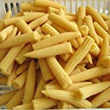 Tradico Super Agri Green Baby Corn-30 Lot de 2 paquets de graines de potager