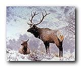 Große Bull Elch Alan Carey Im Schnee Poster/Kunstdruck