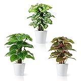 Dr.Planzen Plantas Artificiales con 3 PCS Planta Artificial 24 cm de Plantas Compo Bonsai de plástico para Interior Exterior, jardín, Decoración del hogar