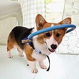 YILUFA Círculo de perro ciego Halo ajustable para mascotas anti-colisión, dispositivo de guía de arnés seguro para mascotas Halo arnés azul (S)