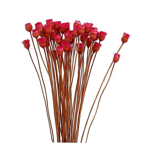 Canjerusof Secado Artificial Decorativo Flores De La Simulación Eterno Florece El Ramo Ramas Secas 1 Manojo Rojo