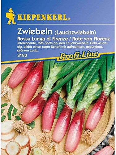 Zwiebeln Lauchzwiebeln Rossa Lunga di Firenze Rote von Florenz rot