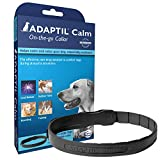 Adaptil calming collar for dogs who pee in the house.