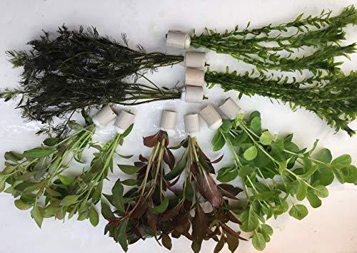 Teichpflanzen Set 10 Bunde Wasserpflanze Teichpflanze Algenprophylaxe Aquarium