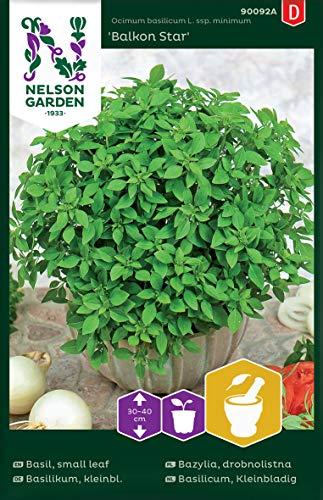 Basilikum Samen kleinblättrig - Nelson Garden Küchenkräuter - Basilikum Kräutersamen kleinblättrig (300 Stück) (Einzelpackung)