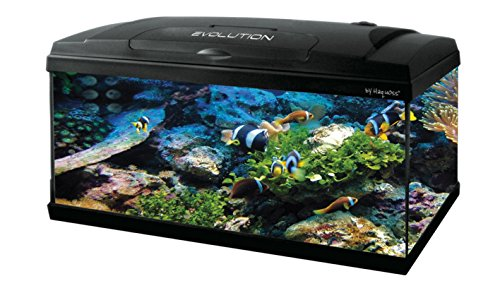Haquoss Evolution 80 Aquarium 80 x 30 x 50h cm, 79 Liter, mit Licht LED 8 Watt, komplett bestückt
