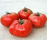 Sandul Moldovan Tomato Seeds (50 Seeds Per...
