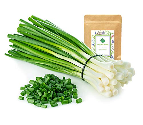 1500+ Long Green Onion Seeds for Garden/Indoor Planting, Easy to Grow Green Scallion Seeds