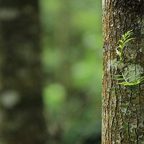 Ambient Forest, Namaste Yoga & Zen