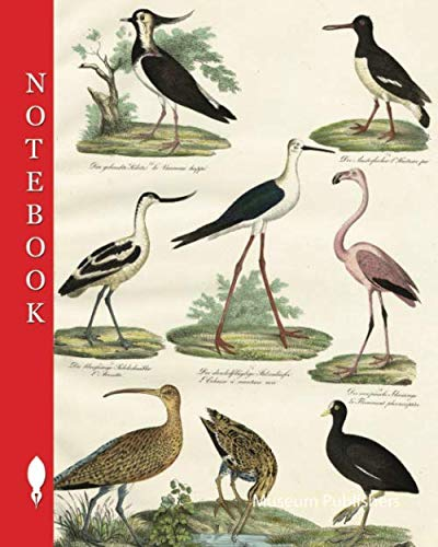 Notebook: Birds: plovers, oystercatchers, avocets, flamingos, snipe birds, whales, 1. The hooded kibitz, 2. The oystercatcher, 3. The blue-footed ... flamingo, 6. The big curlew, 7. The Snipe
