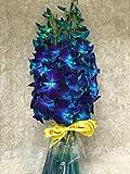 eflowerwholesale- Fresh Cut Flowers - Dendrobium Orchids Bom Tinted Blue