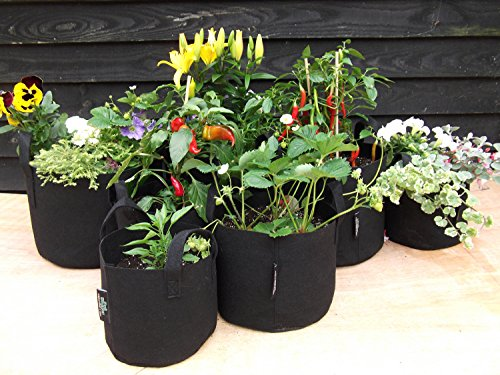 3 x vaso Hogger - alta qualità - vaso fioriera H - 6 litri