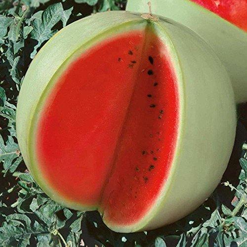 Livraison gratuite 11 des espèces rares Graines de pastèque chinoise à choisir des fruits délicieux melon d'eau graines bonsaïs - 50 Pièces 4