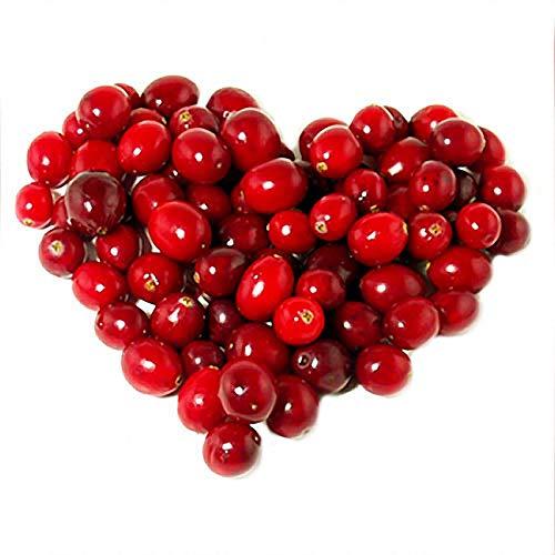 TENGGO Egrow 50Pcs/Bolsa Wild Cranberry Semillas Vaccinium Cherry Bearberry Fruit Semillas Blueberry Semillas para hogar y Plantas de jardín