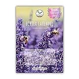 900x Lavendel Samen mit hoher Keimrate - Vielseitig einsetzbare Heilpflanze & ideal für Bienen und Schmetterlinge (inkl. GRATIS eBook)