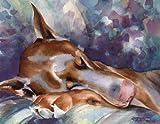 Red Doberman Sleeping - Art Print by Watercolor Artist DJ Rogers