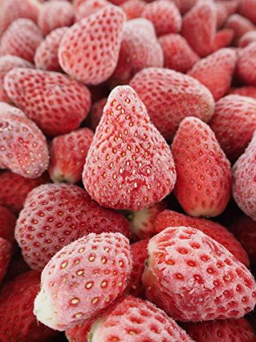さんたファーム 冷凍 いちご 1kg 国産 完熟 急速冷凍 真空包装 (紅ほっぺ)
