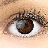 GLAMLENS lentillas de color marrones'Siena Choco' + contenedor. 1 par (2 piezas) - 90 Días - Sin Graduación - 0.00 dioptrías - blandos - Lentes de contacto marrón de hidrogel de silicona