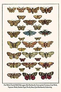 Buyenlarge 0-587-29887-1-G812 Fox Moth, Clouded Buff, Oak Eggar, Oak Hawkmoth, Four-Spotted Footman, Goat Moth, Garden Tiger, Woolly Bear, Eyed Hawkmoth, Underwing Fine Art Giclee Print, 8 x 12